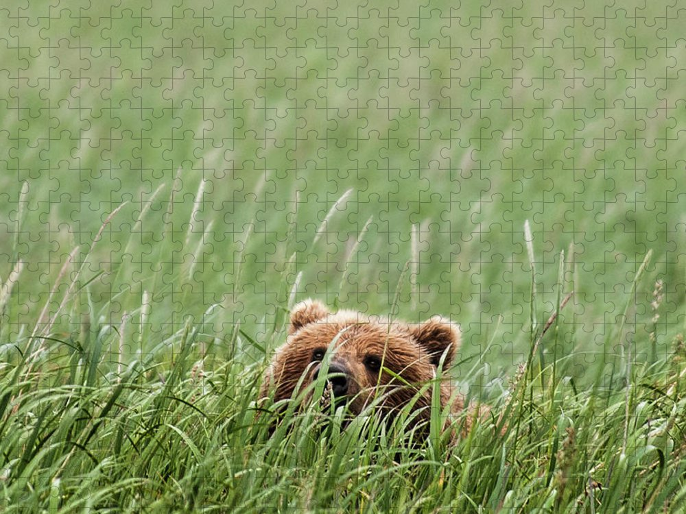 Katmai Peninsula Puzzle featuring the photograph Brown Bear by Trevor Johnston / Eye Meets World Photography