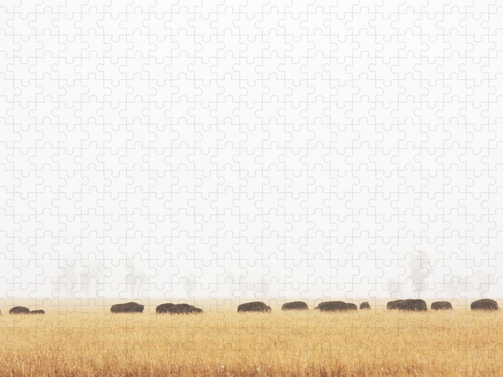 Scenics Puzzle featuring the photograph Buffalo Bison Herd Migration Fog by Chuckschugphotography