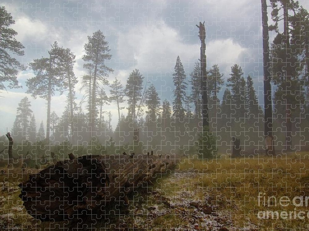 Burnt Puzzle featuring the photograph Burned Trees At Lassen Volcanic by Victor De Souza
