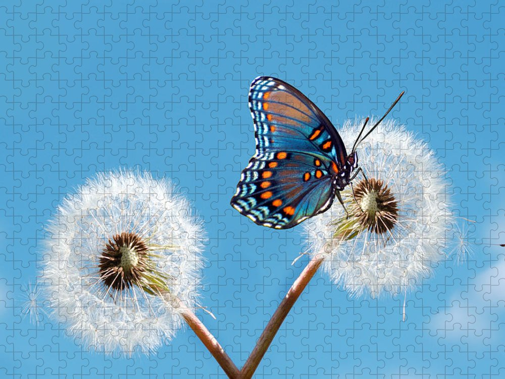 Animal Themes Puzzle featuring the photograph Butterfly On Dandelion by Maria Wachala