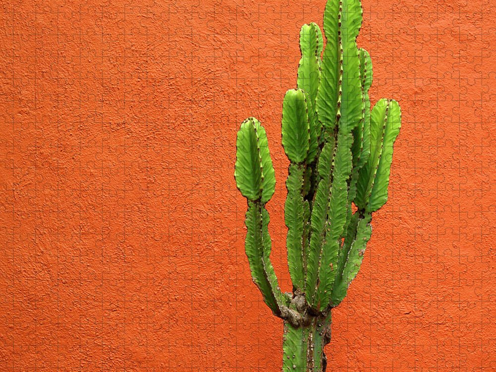 Latin America Puzzle featuring the photograph Cactus And Orange Wall by Mauricio Alcaraz Carbia Photography