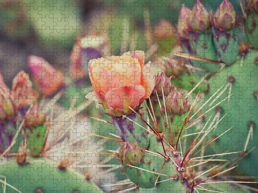 Orange Color Puzzle featuring the photograph Cactus Blossom by Harpazo hope