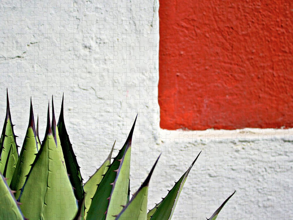 Latin America Puzzle featuring the photograph Cactus by Mario A. De Leo Winkler (accrama)