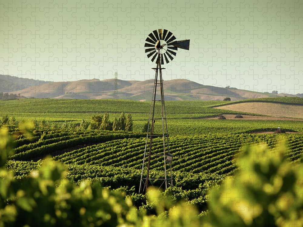 Sonoma County Puzzle featuring the photograph California Wine Country by Halbergman