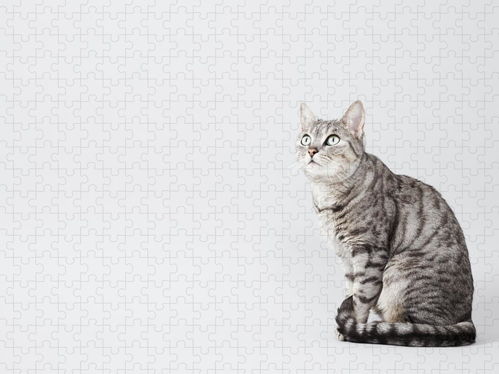 Pets Puzzle featuring the photograph Cat Looking Up by Lisa Stirling