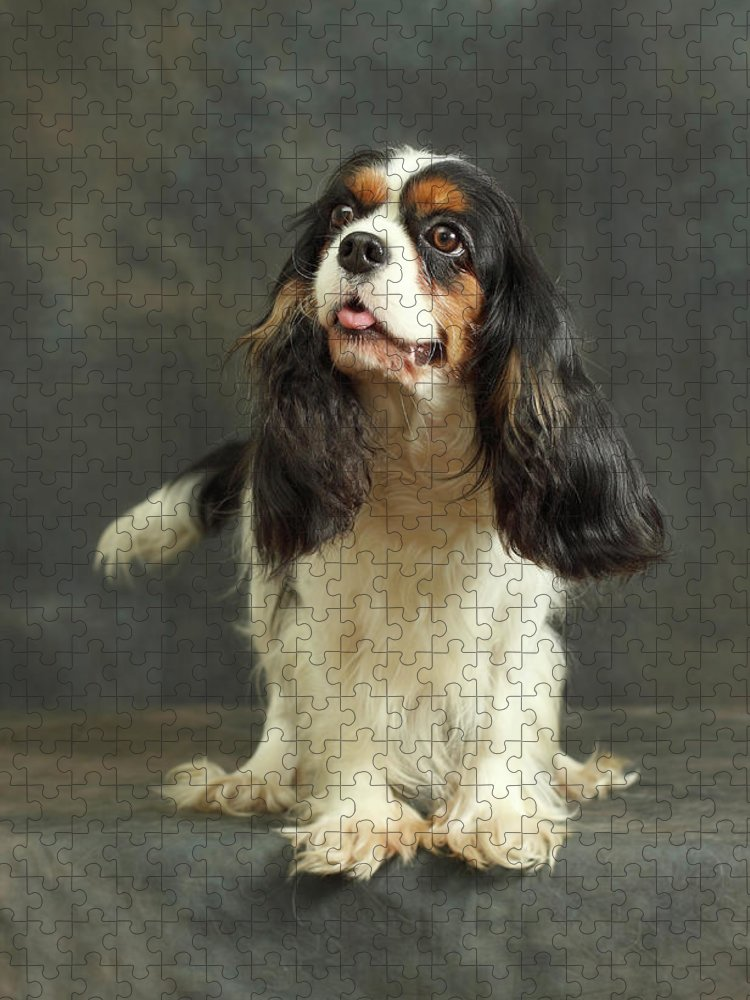 Pets Puzzle featuring the photograph Cavalier King Charles Spaniel by Sergey Ryumin