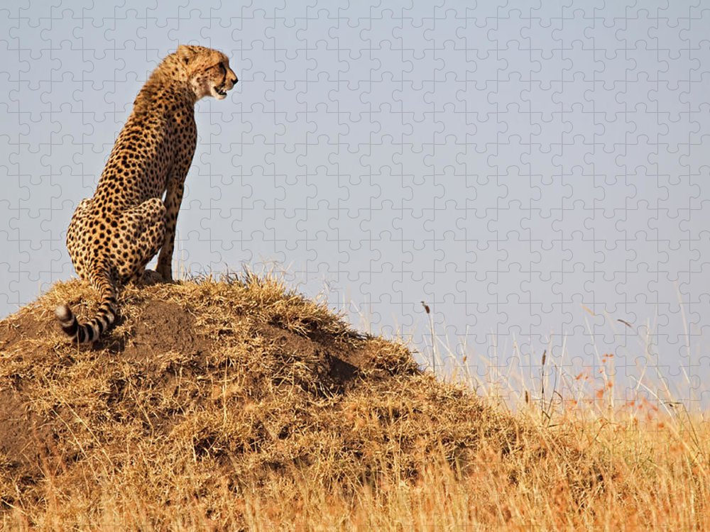 Scenics Puzzle featuring the photograph Cheetah With A View by Wldavies