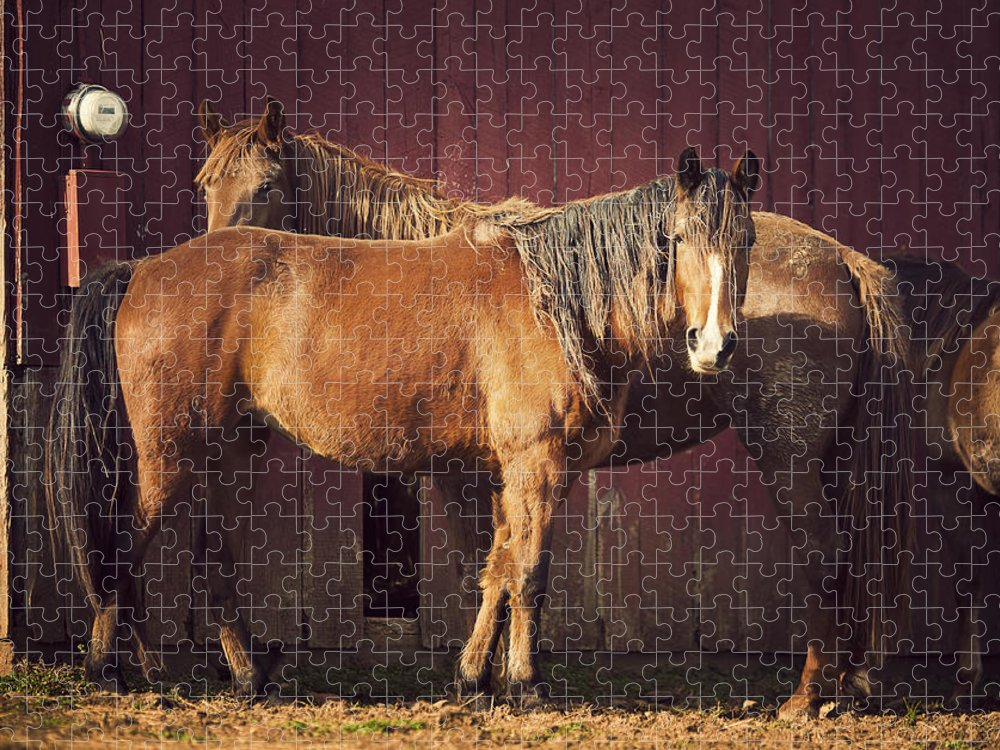 Horse Puzzle featuring the photograph Chestnut Horses by Thepalmer