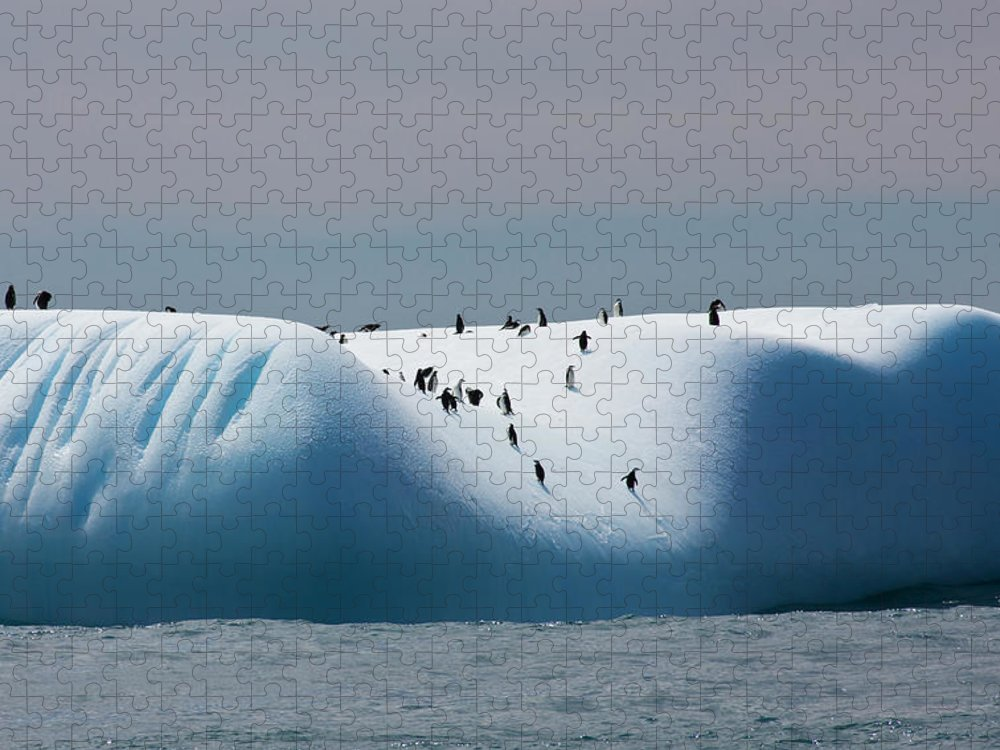Scenics Puzzle featuring the photograph Chinstrap Penguins On Iceberg Off Of by Darrell Gulin