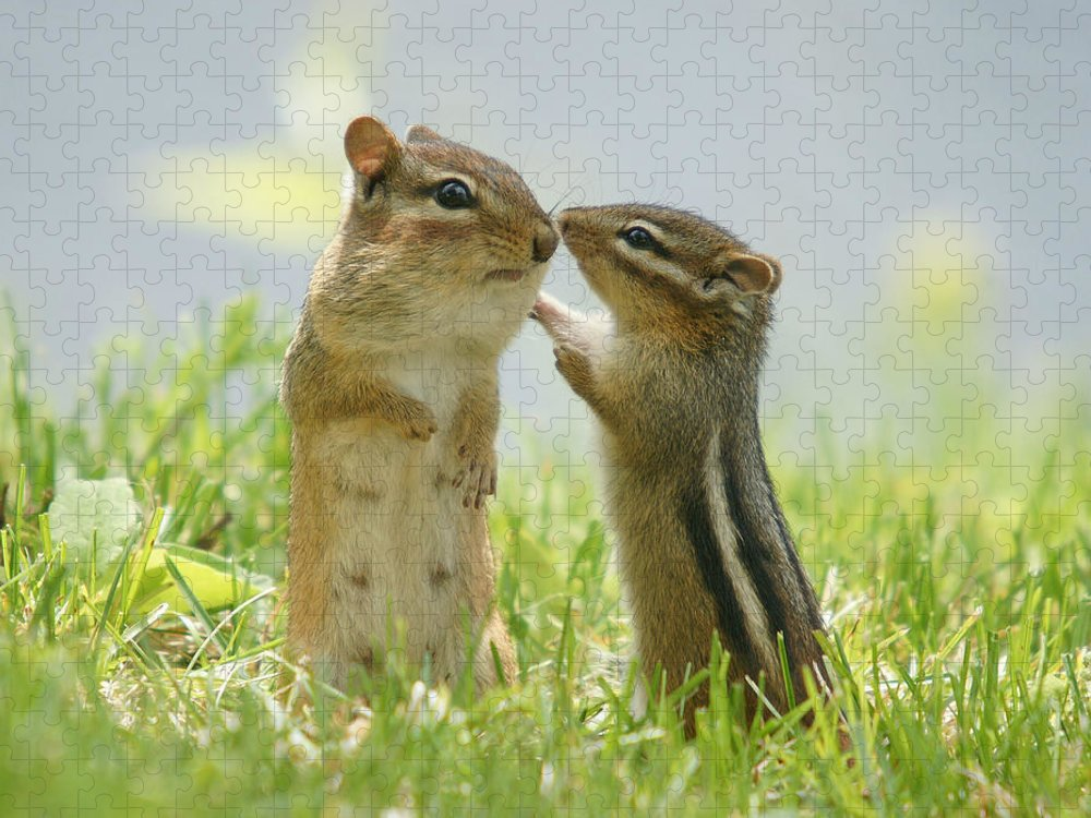 Grass Puzzle featuring the photograph Chipmunks In Grasses by Corinne Lamontagne