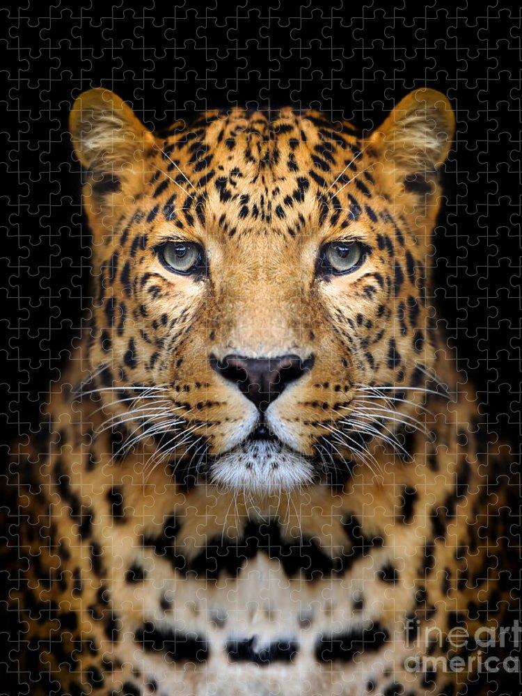 Big Puzzle featuring the photograph Close-up Leopard Portrait On Dark by Volodymyr Burdiak