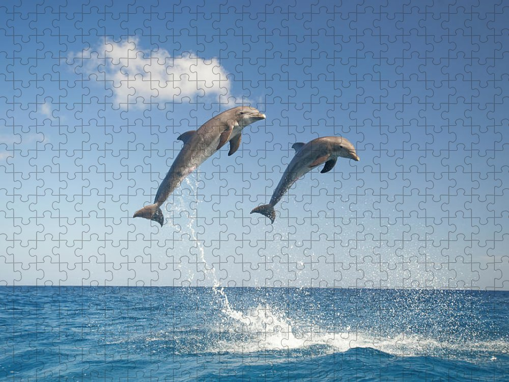 Aerodynamic Puzzle featuring the photograph Common Bottlenose Dolphins Tursiops by Mike Hill