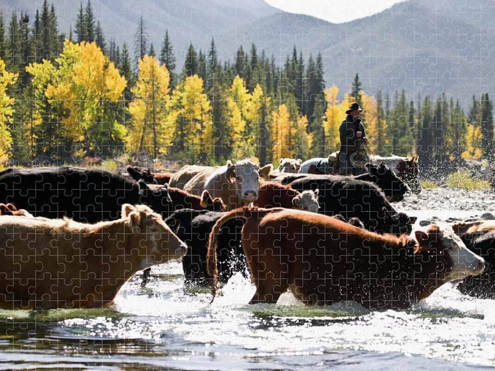 People Puzzle featuring the photograph Cowboy Herding Cattle Across River by Design Pics/carson Ganci