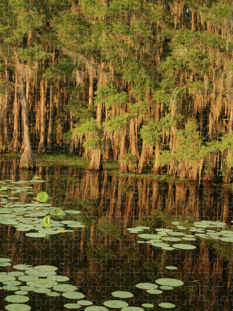 Outdoors Puzzle featuring the photograph Cypress In The Lake by Jlfcapture