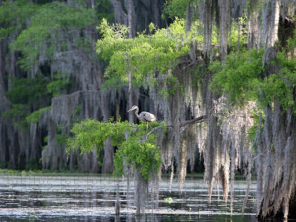 Scenics Puzzle featuring the photograph Cypress Swamp With Great Blue Heron by Jlfcapture