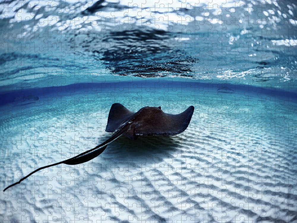 Underwater Puzzle featuring the photograph Deadly Stingray by Extreme-photographer