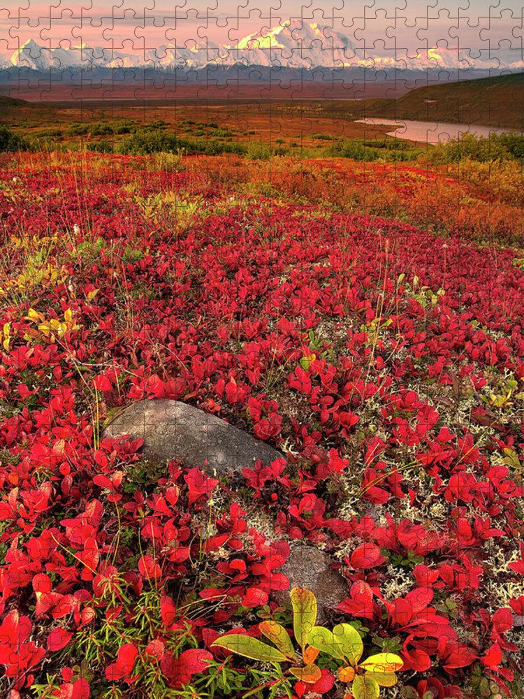 Scenics Puzzle featuring the photograph Denali National Park Fall Colors by Kevin Mcneal