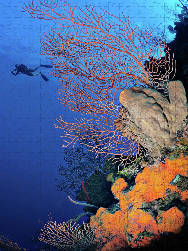 Underwater Puzzle featuring the photograph Discovering The Sea by Extreme-photographer