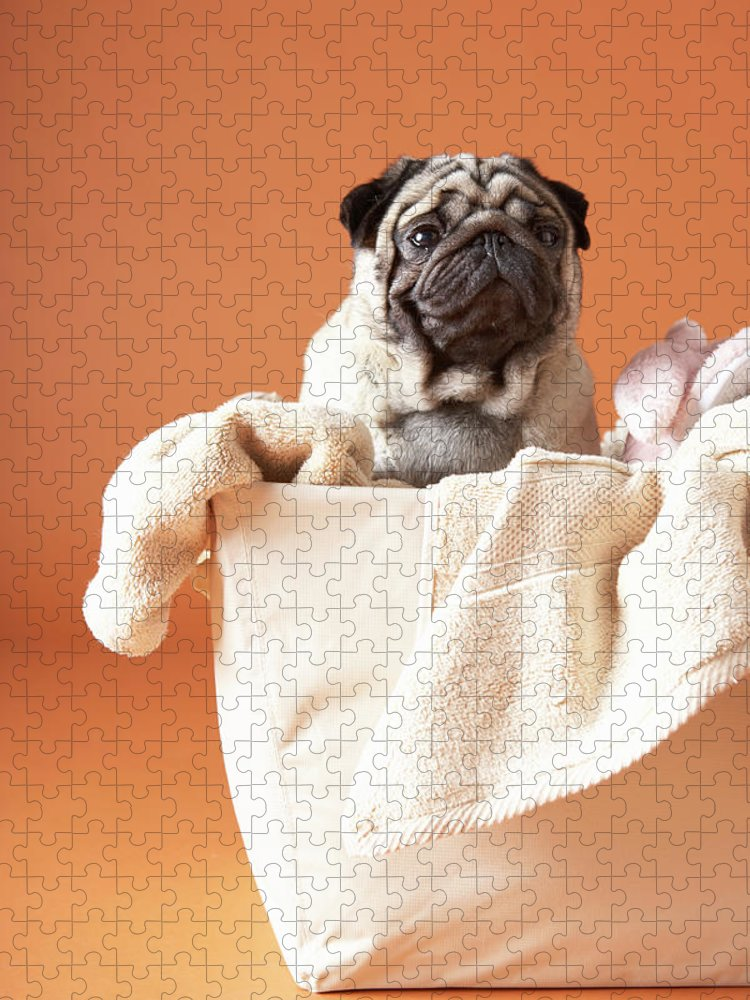 Pets Puzzle featuring the photograph Dog In Basket by Chris Amaral