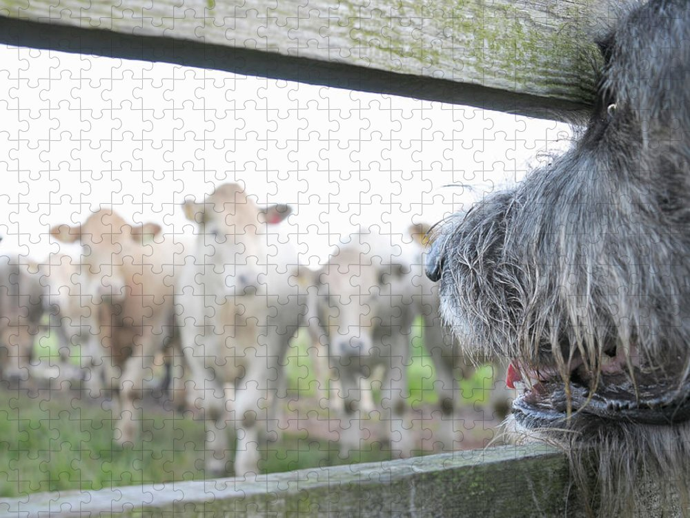 Alertness Puzzle featuring the photograph Dog Watching Cows Through Fence by Cecilia Cartner