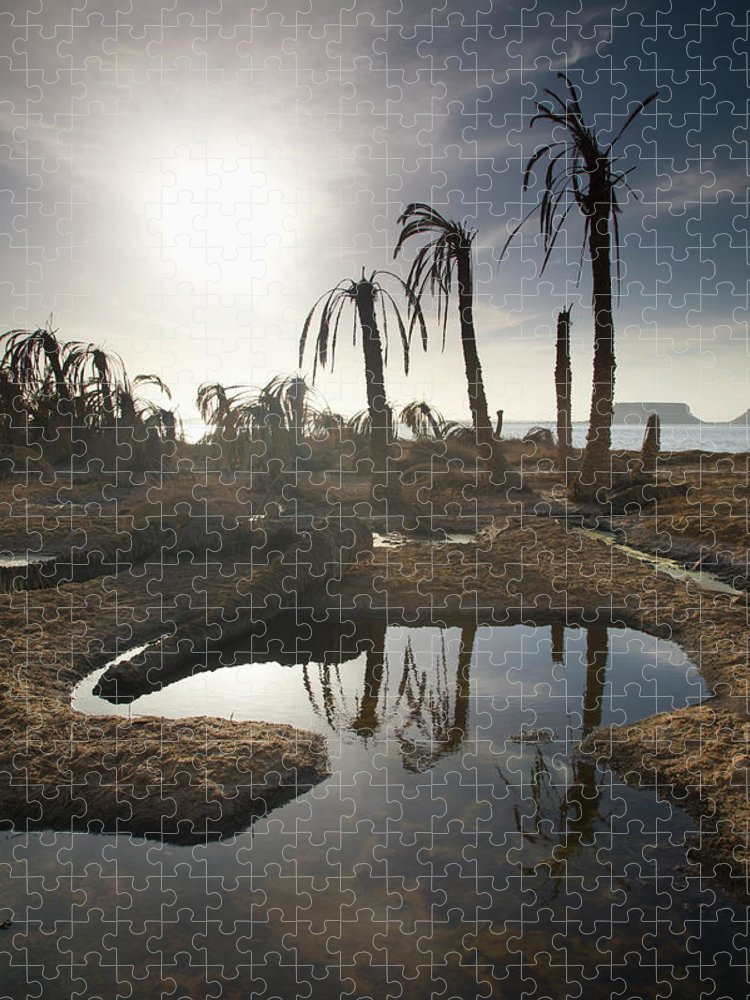 Scenics Puzzle featuring the photograph Dried Up Palm Trees And Salt Water On by Sean White / Design Pics