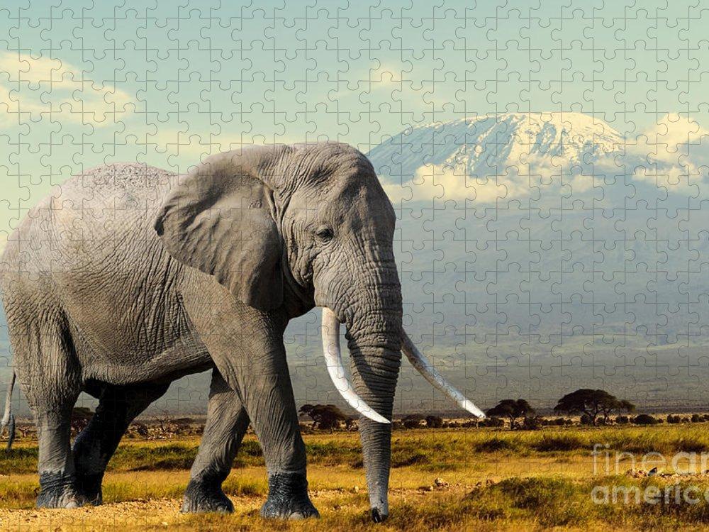 Big Puzzle featuring the photograph Elephant On Kilimajaro Mount Background by Volodymyr Burdiak