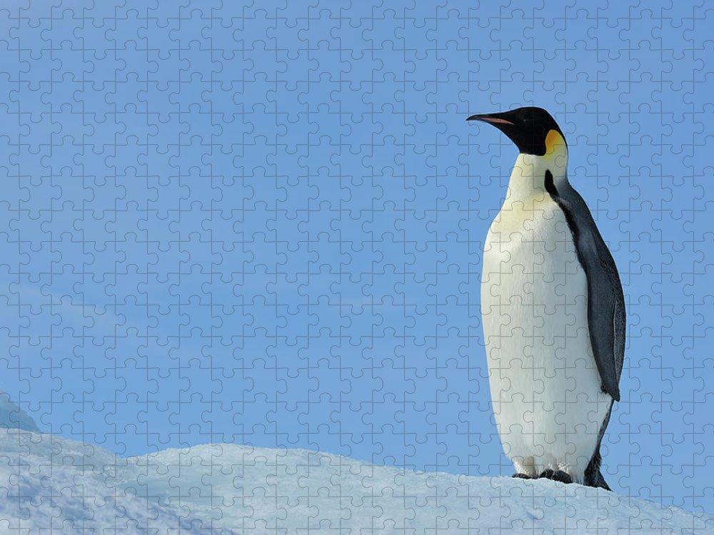 Emperor Penguin Puzzle featuring the photograph Emperor Penguin by Raimund Linke