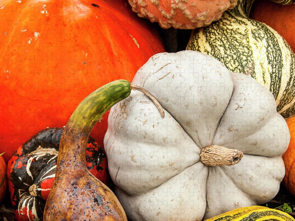 Season Puzzle featuring the photograph Fall Season Squash And Pumpkins by M Timothy O'keefe