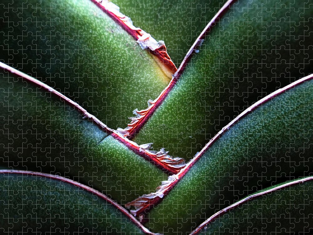 Natural Pattern Puzzle featuring the photograph Fan Leave Succulent Plant by Tontygammy + Images
