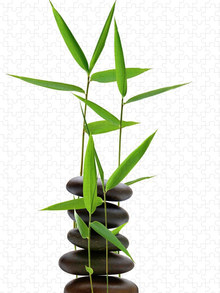 Bamboo Puzzle featuring the photograph Feng Shui Bamboo by Pixhook