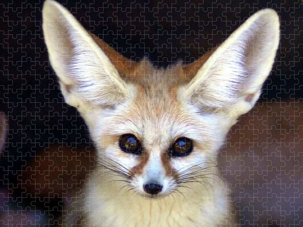 Alertness Puzzle featuring the photograph Fennec Fox by Floridapfe From S.korea Kim In Cherl