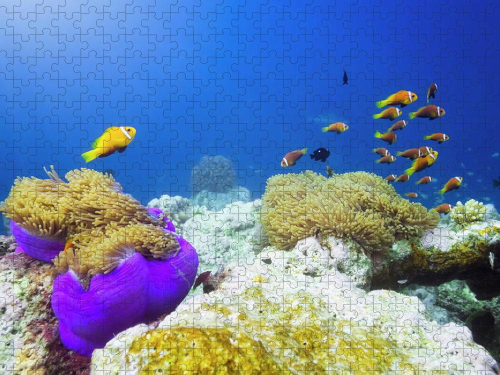Underwater Puzzle featuring the photograph Finding Nemo by Cinoby