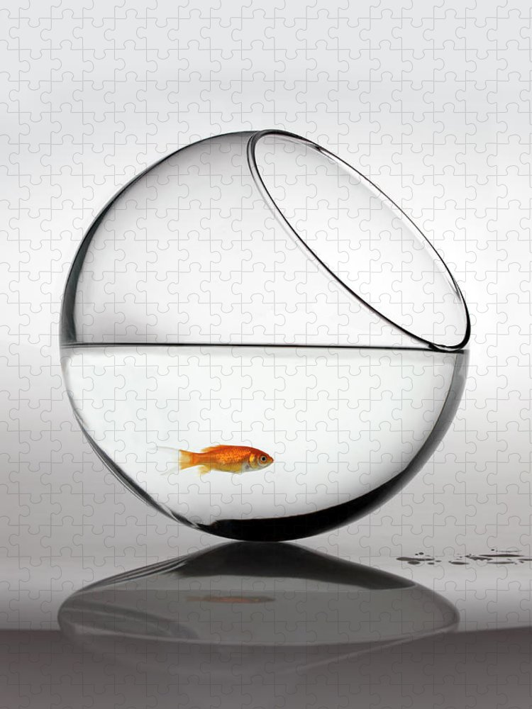 White Background Puzzle featuring the photograph Fish In Fish Bowl Stressed In Danger by Paul Strowger