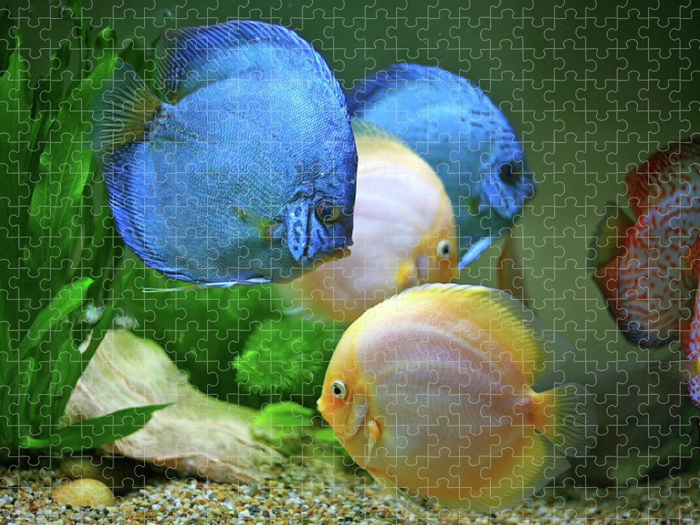 Underwater Puzzle featuring the photograph Fish In Water by Vietnam