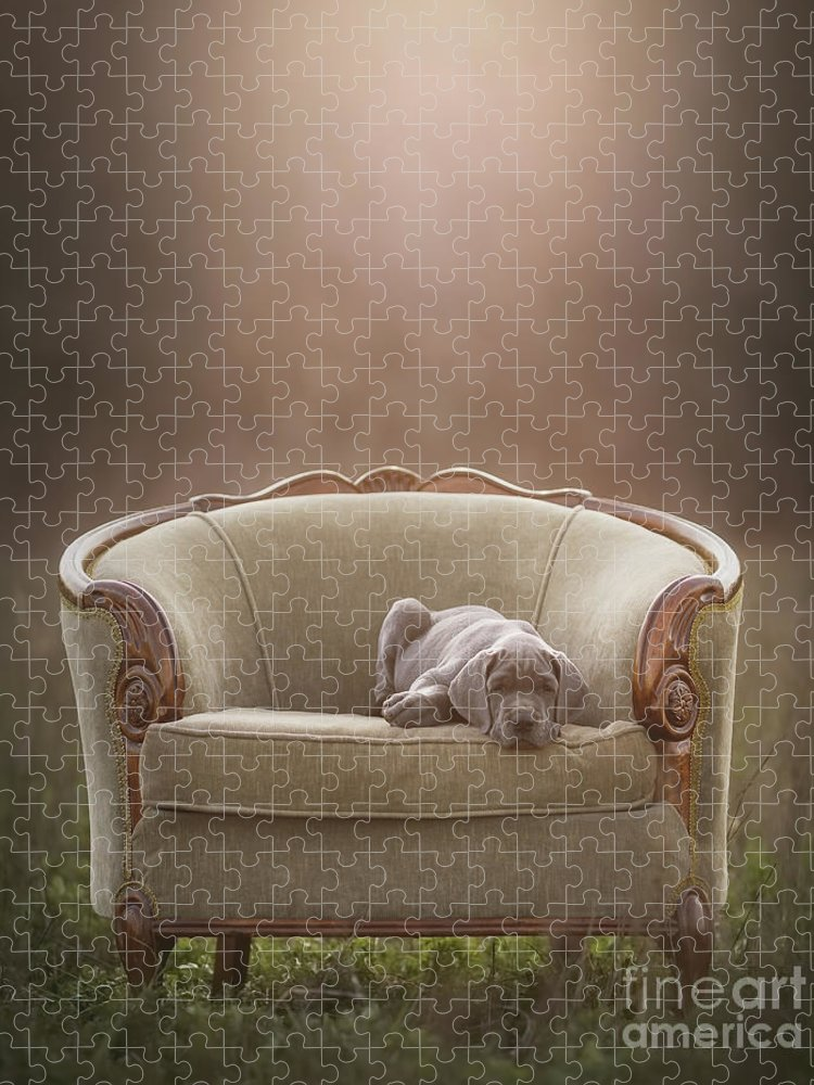 Sofa Puzzle featuring the photograph Floyd by Mike Bons