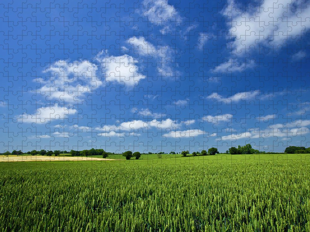 Environmental Conservation Puzzle featuring the photograph Fresh Air. Blue Skies Over Green Wheat by Alvinburrows