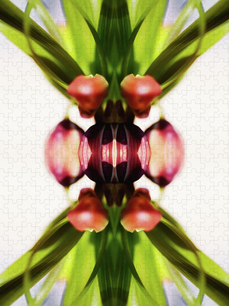 Bud Puzzle featuring the photograph Fritillaria Flower by Silvia Otte