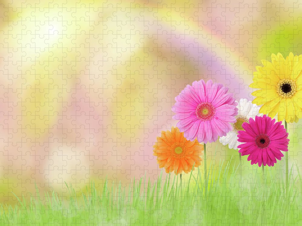 Grass Puzzle featuring the photograph Gerbera Daisies In A Field With Rainbow by Liliboas