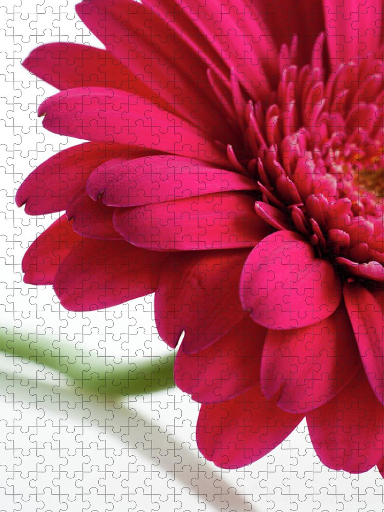 Flowerbed Puzzle featuring the photograph Gerbera Daisy by Subman