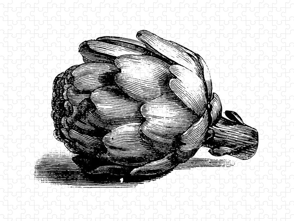 Italian Food Puzzle featuring the digital art Globe Artichoke   Antique Culinary by Nicoolay