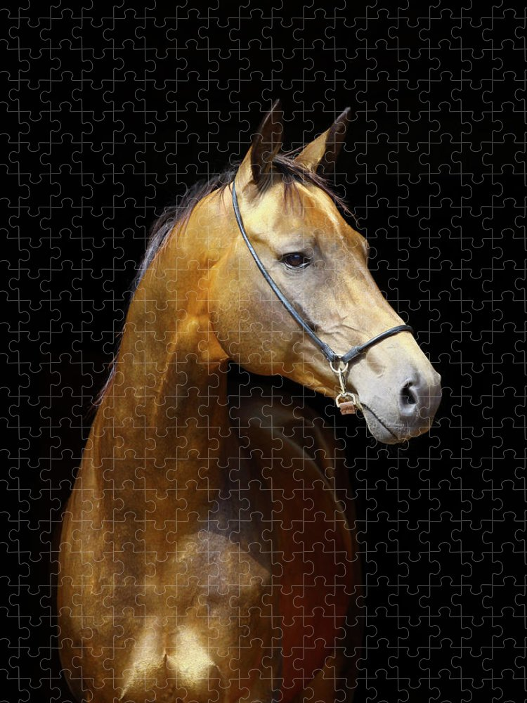 Horse Puzzle featuring the photograph Golden Horse by Photographs By Maria Itina