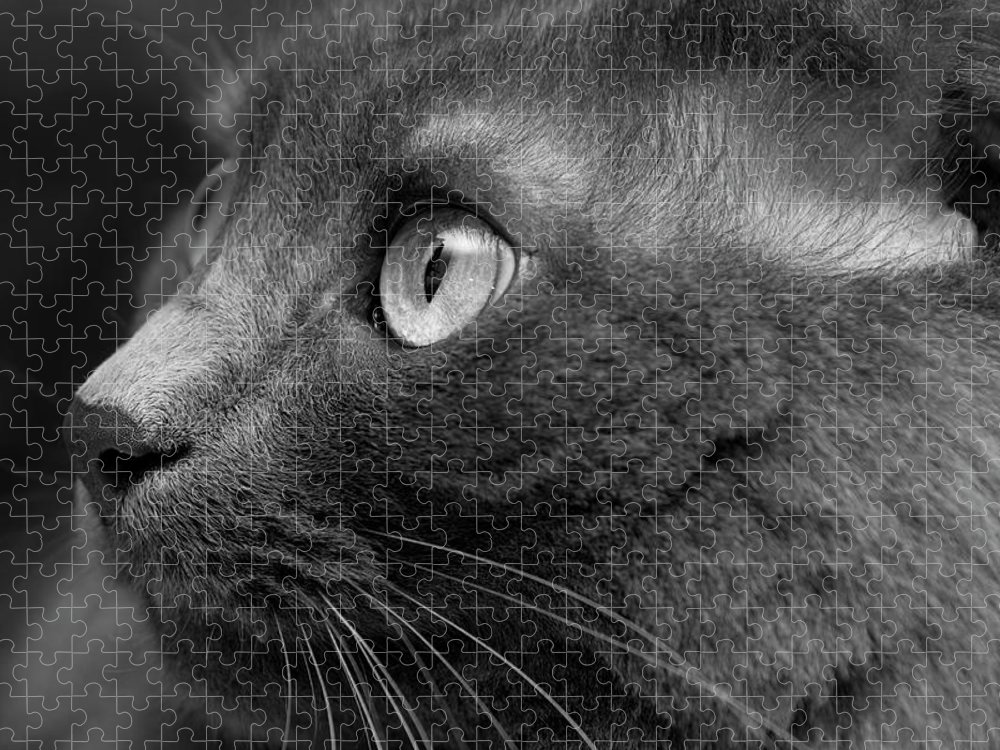 Shadow Puzzle featuring the photograph Gray Cat by Jaguarko