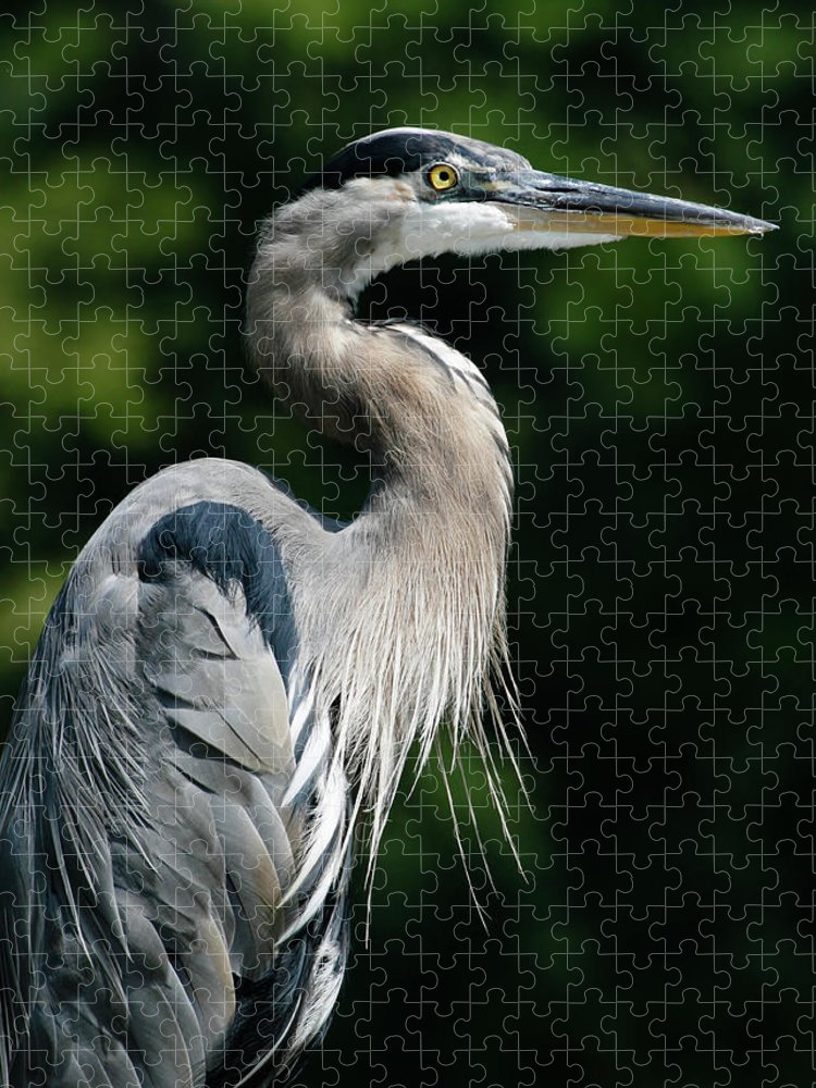North Carolina Puzzle featuring the photograph Great Blue Heron by Bill Swindaman