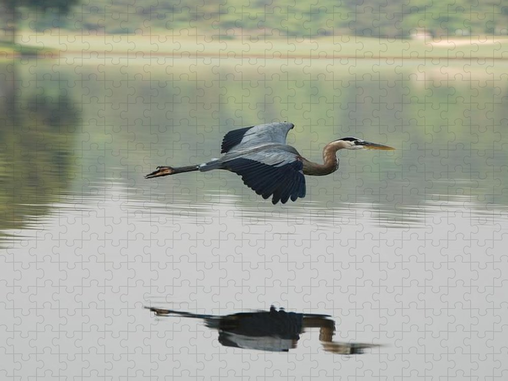 Animal Themes Puzzle featuring the photograph Great Blue Heron In Flight by Photo By Hannu & Hannele, Kingwood, Tx