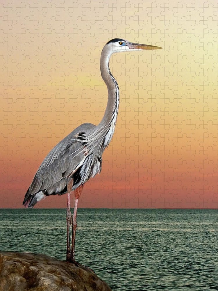 Scenics Puzzle featuring the photograph Great Blue Heron In Seaside Sunset by Melinda Moore