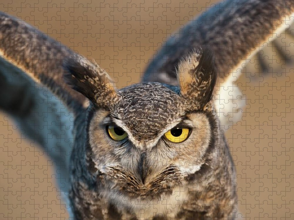 Bird Of Prey Puzzle featuring the photograph Great-horned Owl Bubo Virginianus by Design Pics / David Ponton