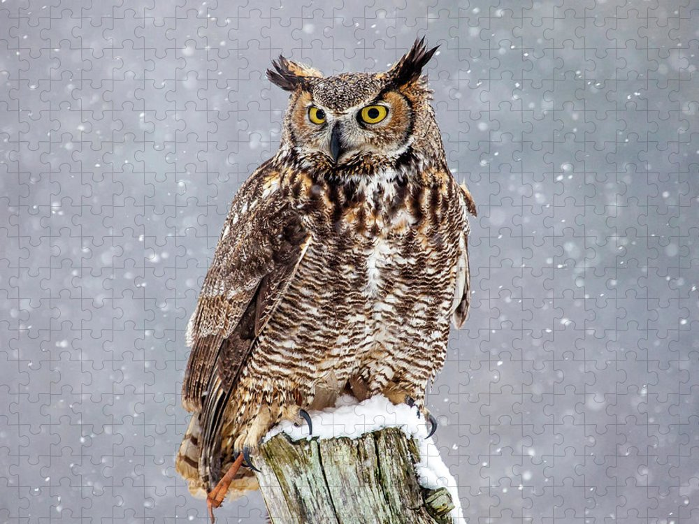 Horned Puzzle featuring the photograph Great Horned Owl by Paul Bruch Photography