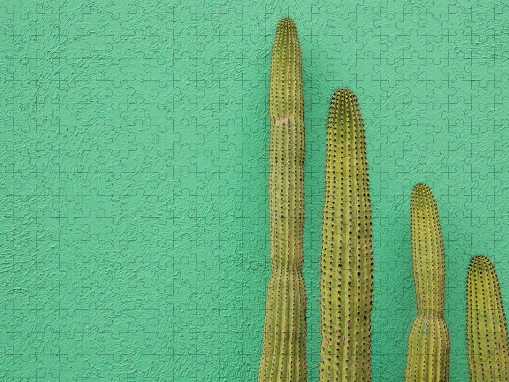 Tranquility Puzzle featuring the photograph Green Wall And Cactus by Joanna Mccarthy