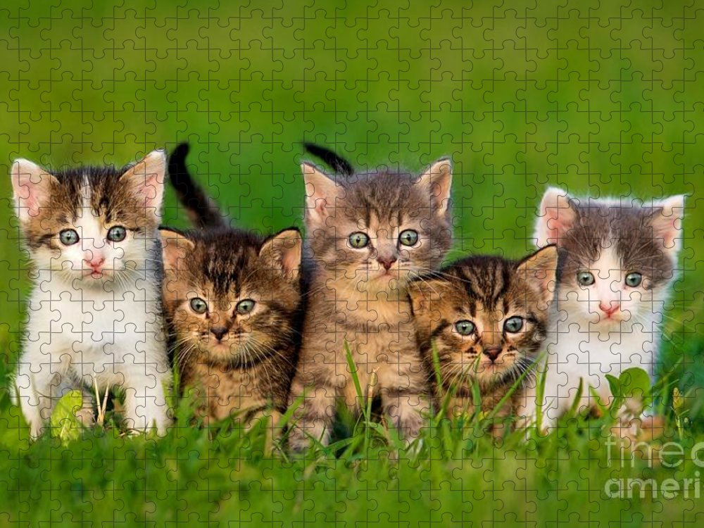 Small Puzzle featuring the photograph Group Of Five Little Kittens Sitting by Grigorita Ko
