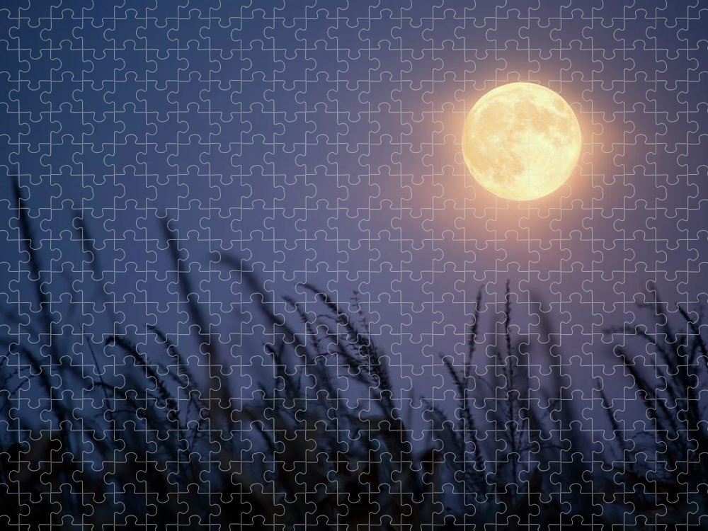 Sky Puzzle featuring the photograph Harvest Moon by Jimkruger